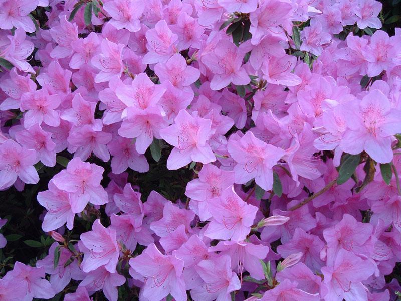 amuleti fiori e piante portafortuna super mamma di