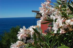 La Francesca Resort - Casetta e fioritura